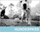 Hundespass